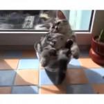 Cute Kitten In Cup